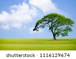 big tree in the garden and the... | Shutterstock . vector #1116129674