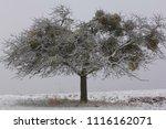 tree in the wintertime | Shutterstock . vector #1116162071