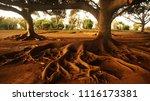trees landscape with abundant...   Shutterstock . vector #1116173381