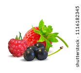 fresh  nutritious and tasty...   Shutterstock .eps vector #1116182345