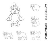 toy animals outline icons in... | Shutterstock .eps vector #1116183695