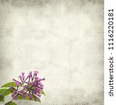 Small photo of textured old paper background with Purple flowering Cestrum aka jessamine