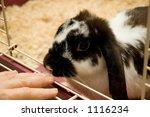 rabbit rubbing a lady's hand   Shutterstock . vector #1116234
