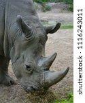 white rhinoceros or square...   Shutterstock . vector #1116243011