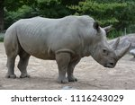 white rhinoceros or square...   Shutterstock . vector #1116243029