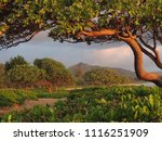Small photo of Morning sunlight shining on the heliotrope trees, naupaka kahakai, and mountains in Lihue, Kauai, Hawaii, USA