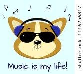 dog corgi musician  listening... | Shutterstock .eps vector #1116256817