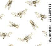 vector illustration. cicadas .... | Shutterstock .eps vector #1116289961