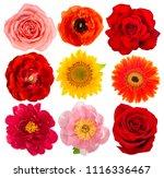 Flower Head Rose Sunflower Peony - Fine Art prints