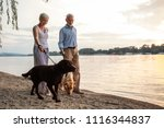 Stock photo shot of a happy senior couple walking with their dogs by the river 1116344837