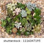 cute succulent plants top view | Shutterstock . vector #1116347195