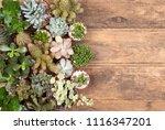 cute succulent plants on wooden ... | Shutterstock . vector #1116347201