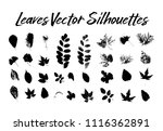 black silhouette with leaf of... | Shutterstock .eps vector #1116362891