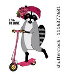 vector raccoon with a pink kick ... | Shutterstock .eps vector #1116377681