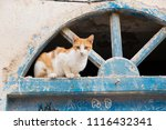 Street Cats For Morocco
