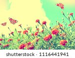 colorful bright flowers... | Shutterstock . vector #1116441941