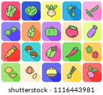 colorful of variety vegetable... | Shutterstock .eps vector #1116443981