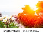 sea view from on tropical beach | Shutterstock . vector #1116451067