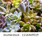 close up of various type of... | Shutterstock . vector #1116469019
