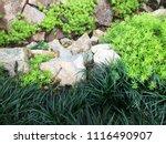 Asparagus Fern And Stone. Fres...
