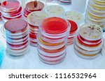 petri dish. microbiological... | Shutterstock . vector #1116532964