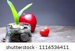 plant growing over money coins... | Shutterstock . vector #1116536411