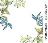 elaeagnus leaves in a... | Shutterstock . vector #1116589124