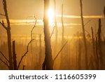 midsummer morning sunrise in... | Shutterstock . vector #1116605399
