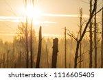 midsummer morning sunrise in... | Shutterstock . vector #1116605405