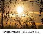 midsummer morning sunrise in... | Shutterstock . vector #1116605411