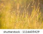 midsummer morning sunrise in... | Shutterstock . vector #1116605429