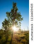 midsummer morning sunrise in... | Shutterstock . vector #1116605435