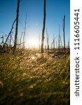 midsummer morning sunrise in... | Shutterstock . vector #1116605441