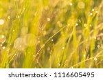 midsummer morning sunrise in... | Shutterstock . vector #1116605495