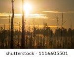 midsummer morning sunrise in... | Shutterstock . vector #1116605501