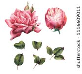 roses and leaves  watercolor ... | Shutterstock . vector #1116609011