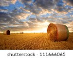 straw bales in the sunset   Shutterstock . vector #111666065