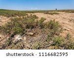 abandoned bird nest on a very... | Shutterstock . vector #1116682595
