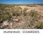 abandoned bird nest on a very... | Shutterstock . vector #1116682601