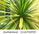 the single leaf photo of tree... | Shutterstock . vector #1116726935