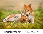 Stock photo two happy dog border collie laying on the grass 111676019
