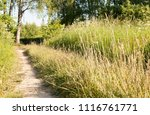 background image of the forest... | Shutterstock . vector #1116761771