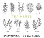 beautiful vector hand drawn tea ... | Shutterstock .eps vector #1116766007