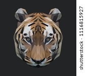 tiger low poly design. triangle ... | Shutterstock .eps vector #1116815927