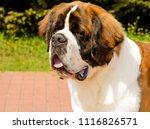 Moscow Watchdog Portrait. ...