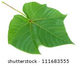 Small photo of Abroma Augusta or medicinal Olatkambal over white background