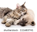Stock photo the kitten whispers to a dog isolated on white background 111683741
