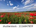 sunset over field with red... | Shutterstock . vector #1116847859