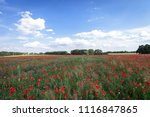 sunset over field with red... | Shutterstock . vector #1116847865