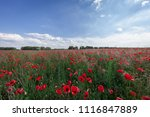 sunset over field with red... | Shutterstock . vector #1116847889